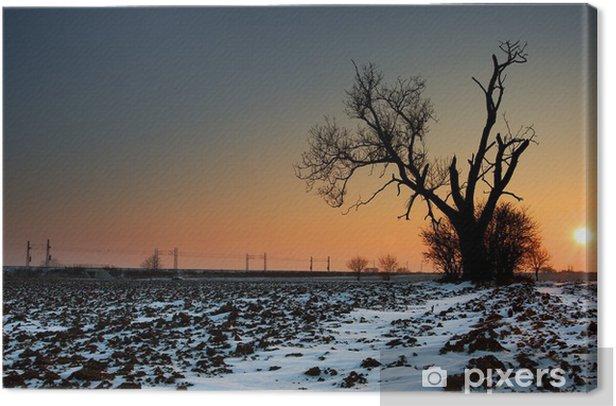 Obraz na płótnie Zachód słońca na zamarzniętym polu z starego drzewa - Krajobraz wiejski