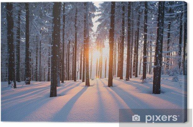 Obraz na płótnie Zachód słońca w zimowym lesie -