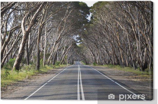 Obraz na płótnie Zadrzewionej drogi na Kangaroo Island, South Australia - Tematy