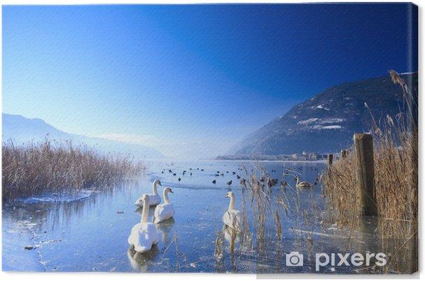 Obraz na płótnie Zamarznięte jezioro w Alpach z łabędzie i kaczki na lodzie w zimie - Łabędzie