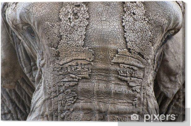 Obraz na płótnie Zamknij się portret twarzy African Elephant Loxodonta Africana - Ssaki