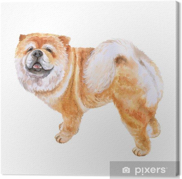 Obraz na płótnie Zbliżenie akwarela portret psa chow chow na białym tle. zabawny pies pokazujący język. ręcznie rysowane słodkie domowe zwierzaka. popularny pies rasy dużych pozowanie. projekt karty z pozdrowieniami. praca z klipami - Zwierzęta
