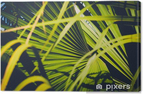 Obraz na płótnie Zbliżenie liści palmowych, wewnątrz tropikalnego ogrodu - roślina tło - Rośliny i kwiaty