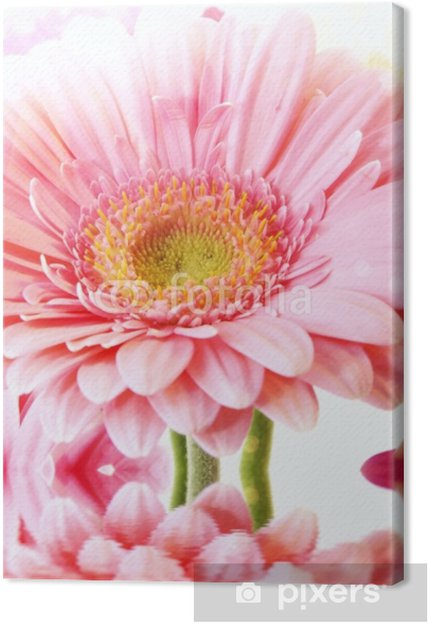 Obraz na płótnie Zbliżenie na gerbera flower_sun_water. - Kwiaty