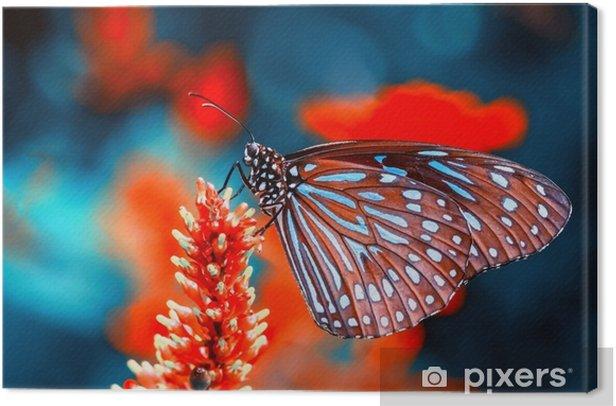 Obraz na płótnie Zbliżenie piękny motyl i kwiat w ogrodzie. - Zwierzęta