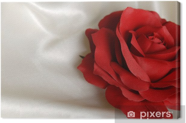 Obraz na płótnie Zbliżenie z czerwoną różą na białym atłasem - Szczęście