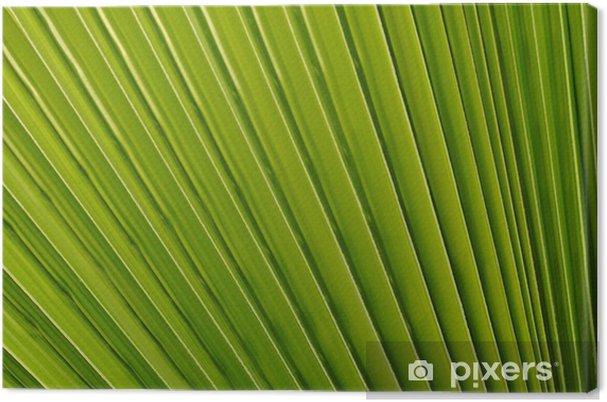 Obraz na płótnie Zbliżenie z liści podobnych do wentylatora z palmą - Rośliny