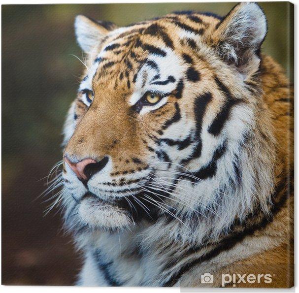 Obraz na płótnie Zbliżenie z tygrysa syberyjskiego również wiedzieć, jak amur tygrys (Panthera ti - Tematy