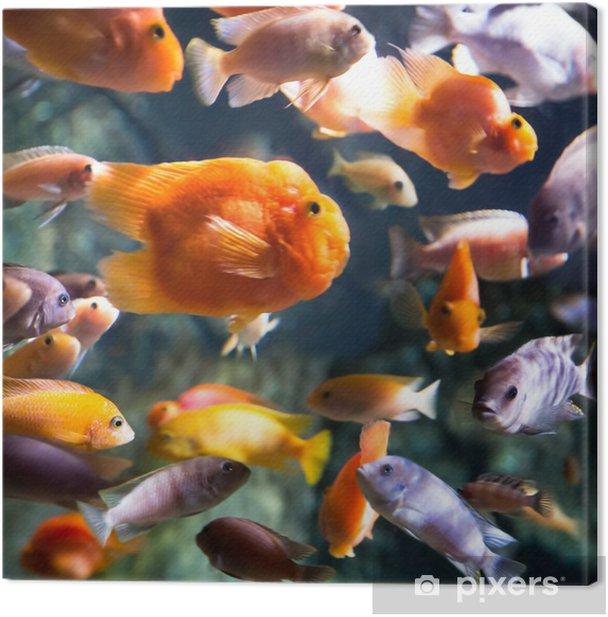 Obraz na płótnie Zdjęcie z tropikalnych ryb - Zwierzęta żyjące pod wodą