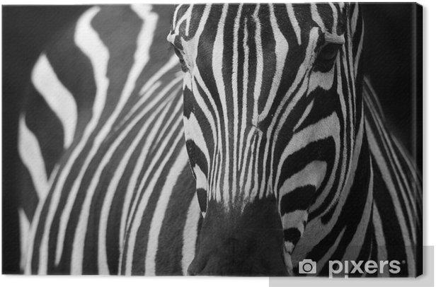 Obraz na płótnie Zebra 2 - Tematy
