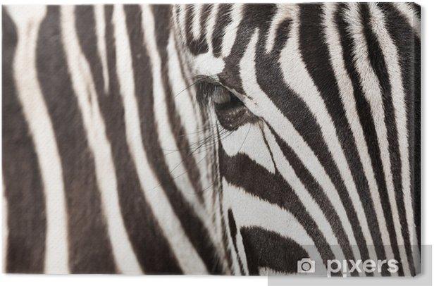 Obraz na płótnie Zebra - detal - Style