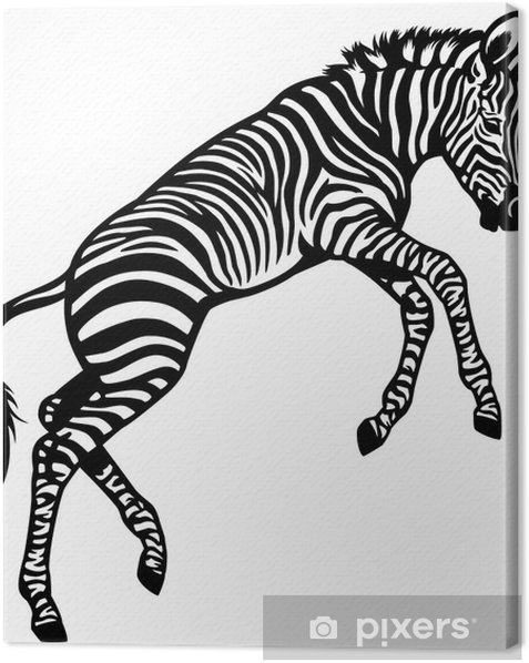 Obraz na płótnie Zebra Dziecko - Ssaki
