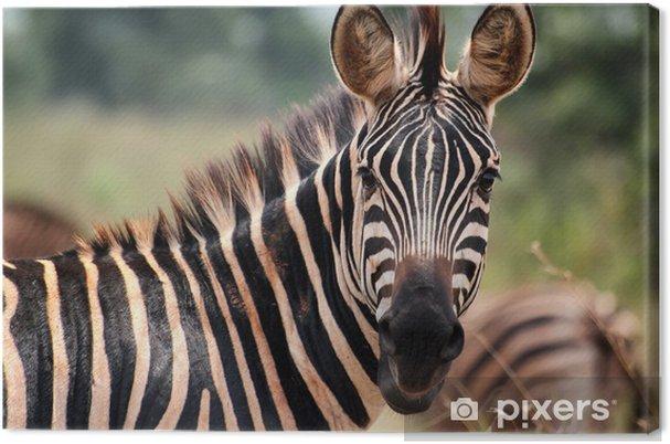 Obraz na płótnie Zebra w Akagera National Park w Rwandzie - Tematy