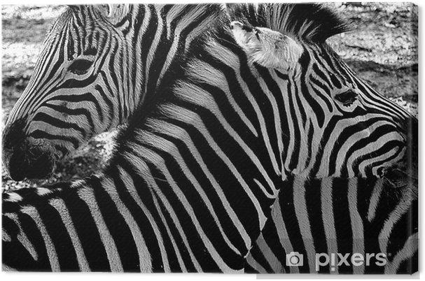 Obraz na płótnie Zebra - Tematy
