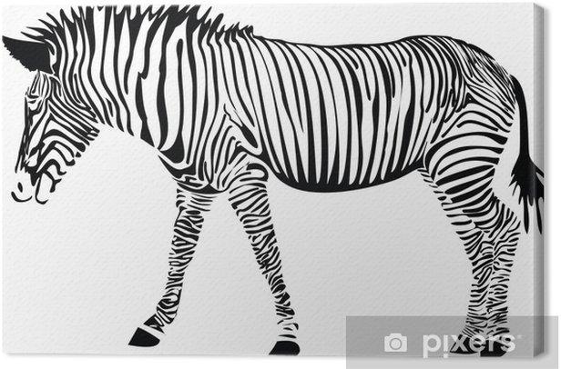 Obraz na płótnie Zebra - Ssaki
