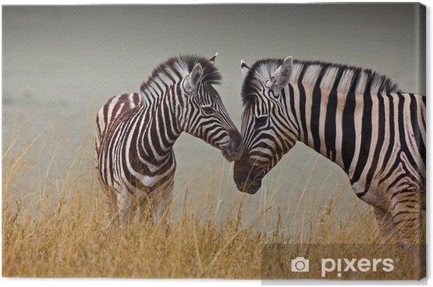 Obraz na płótnie Zebry - matka i syn - Tematy