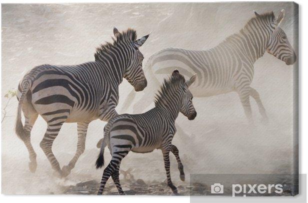 Obraz na płótnie Zebry na biegu - Zwierzęta