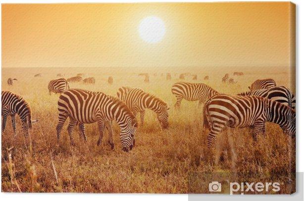 Obraz na płótnie Zebry stado na afrykańskiej sawanny o zachodzie słońca. - Tematy