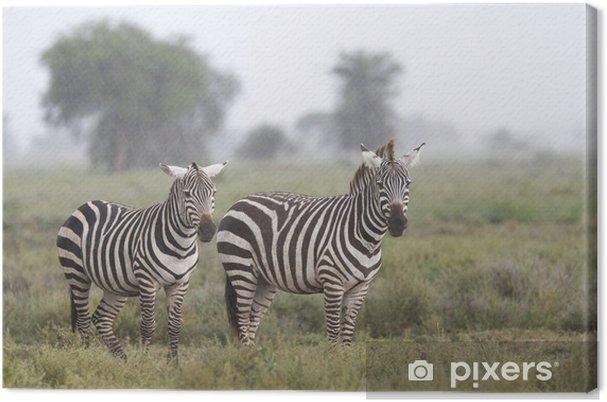 Obraz na płótnie Zebry stojąc w deszczu - Tematy