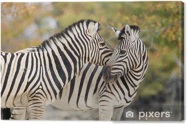 Obraz na płótnie Zebry w czułości - Tematy