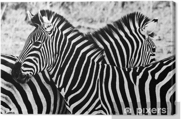 Obraz na płótnie Zebry w Kruger National Park, Republika Południowej Afryki - Style