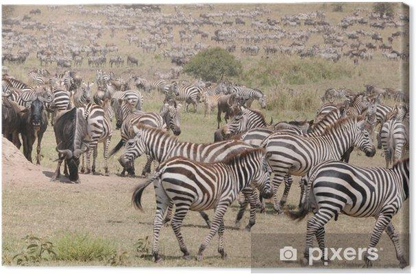 Obraz na płótnie Zebry - Tematy