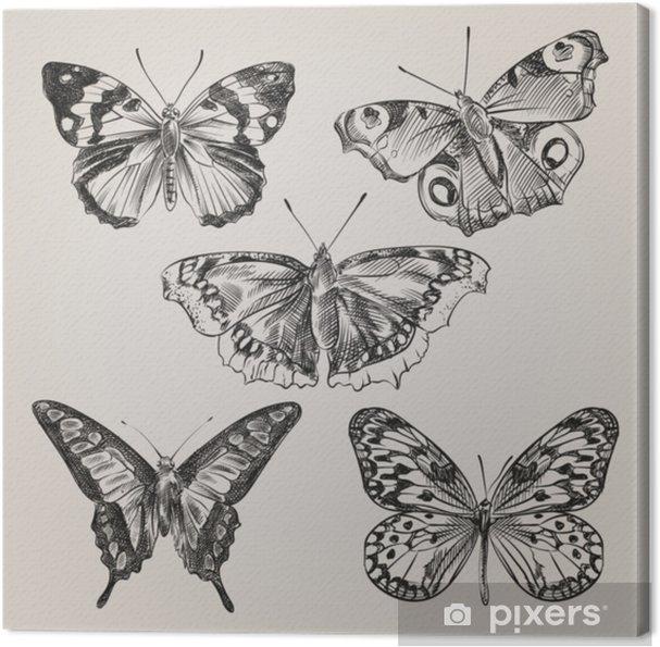 Obraz na płótnie Zestaw ręcznie rysowane motyle na białym tle. motyl w stylu szkicu. retro ręcznie rysowane ilustracji wektorowych. - Zwierzęta