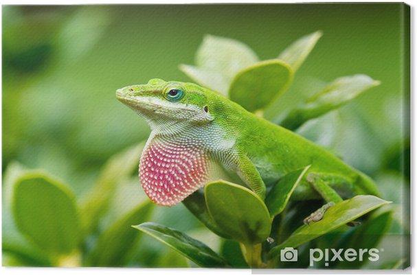 Obraz na płótnie Zielona Anole jaszczurka (carolinensis Anolis) pokazując różowy podgardle - Tematy