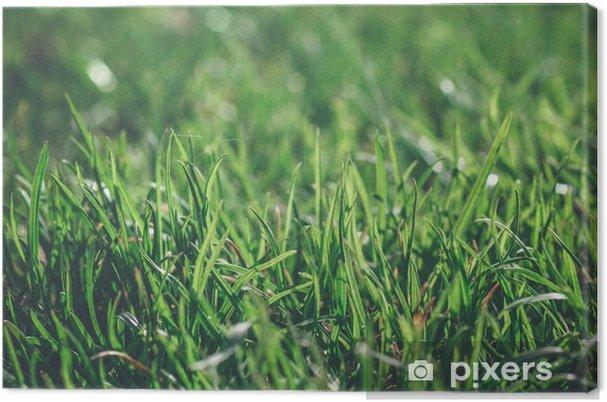 Obraz na płótnie Zielona trawa w jasny dzień rosy bliska makro - Krajobrazy