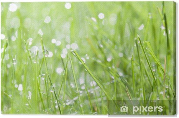 Obraz na płótnie Zielona trawa z rosy wody - Pory roku