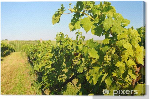 Obraz na płótnie Zielona winnica - Krajobraz wiejski