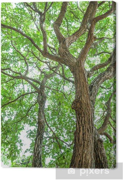 Obraz na płótnie Zielone drzewa w tle - Cuda natury