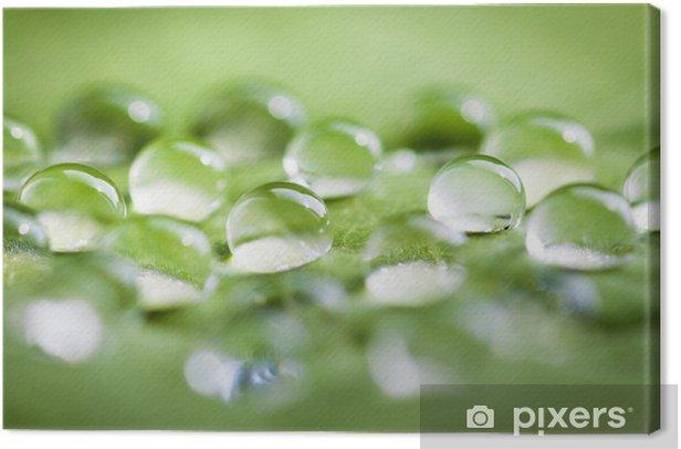 Obraz na płótnie Zielone liści z kropli wody, makro. - Pory roku