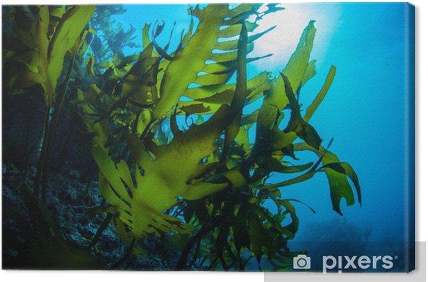 Obraz na płótnie Zielone wodorosty taniec na morzu - Krajobrazy
