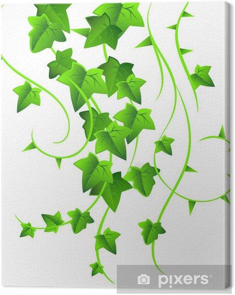 Obraz na płótnie Zielony bluszcz - Criteo