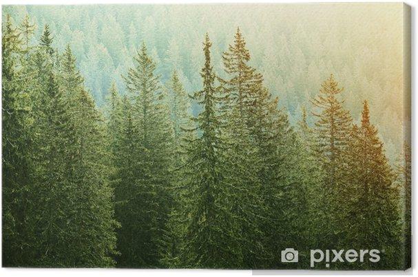 Obraz na płótnie Zielony las iglasty oświetlony przez światło słoneczne - Krajobrazy
