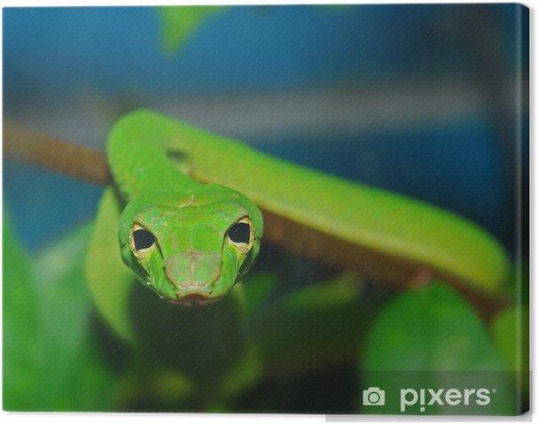 Obraz na płótnie Zielony wąż w ogrodzie - Inne Inne