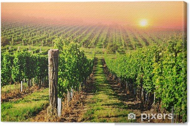 Obraz na płótnie Zielony winnic na Morawach Południowych o wschodzie słońca - iStaging