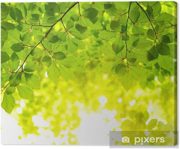 Obraz na płótnie Zielonych liści w tle - Drzewa