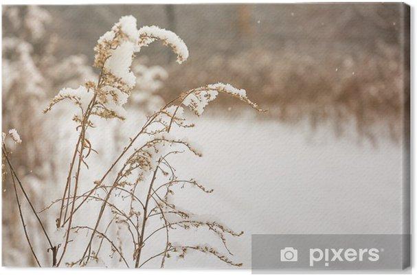 Obraz na płótnie Zima Grsass - Pory roku