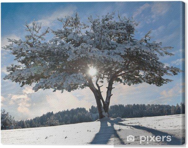 Obraz na płótnie Zimowe drzewa, podświetlany - Góry