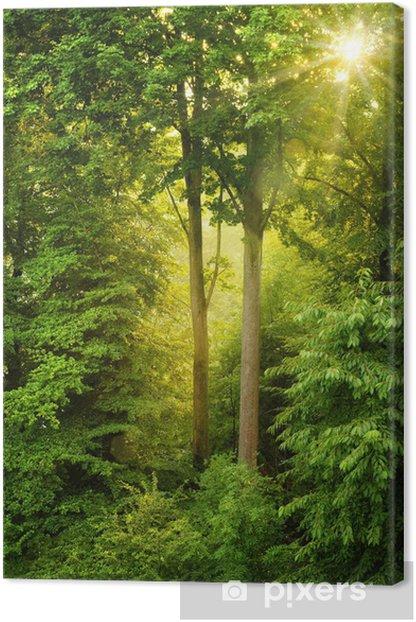 Obraz na płótnie Złote słońce świeci przez drzewa -