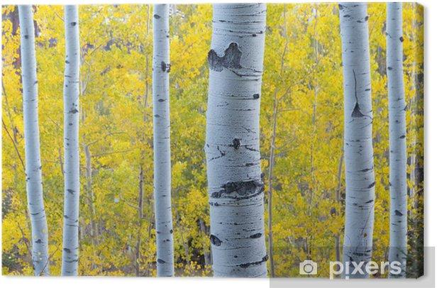 Obraz na płótnie Złoty żółty Aspen pozostawia Blue Light Aspen pni drzewa - Pory roku