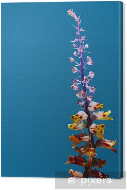 Obraz na płótnie Zmiana Lachenalia - Kwiaty