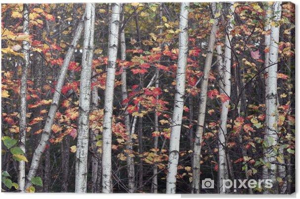 Obraz na płótnie Zobacz Jesień w lesie - Tematy