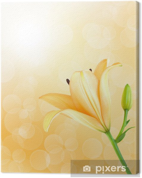Obraz na płótnie Zolta lilia - Tła