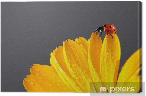 Obraz na płótnie Żółta stokrotka z czerwonym biedronka - Inne Inne