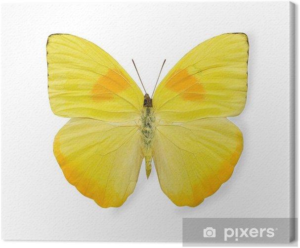 Obraz na płótnie Żółty motyl, na białym tle - Uroda i pielęgnacja ciała