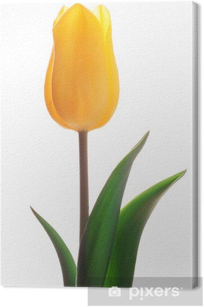 Obraz na płótnie Żółty tulipan - Kwiaty