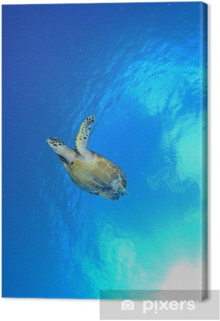 Obraz na płótnie Żółw morski - Pod wodą